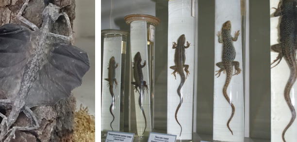Recent Amphibians and Reptiles Collection