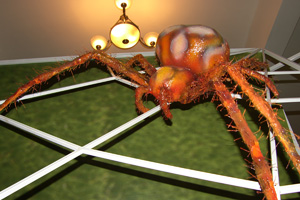 Enlarged model of a spider will occupy a central place in the exhibition (c) NMNHS