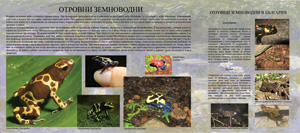 Amphibians and reptiles (1)