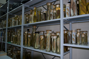 A specialised repository for research collections at the NMNHS (3)