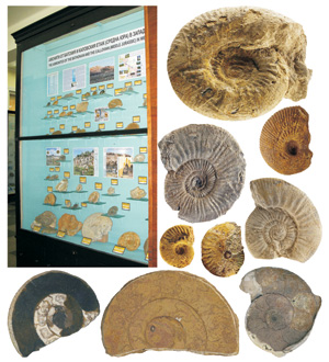 New collection of ammonites in the palaeontological exhibition of the National Museum of Natural History (c) NMNHS