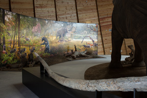 Tales from the Pliocene, the lost world of the mastodons (4) (c) NMNHS
