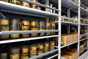The scientific collections of the National Museum of Natural History and the Institute of Biodiversity and Ecosystem Research at BAS have been recognised as part of the European Strategy Forum on Research Infrastructures (ESFRI) (1) (c) NMNHS