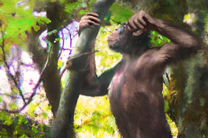 Remains of a new hominid from Germany (more than 11.5 million years old) change our views on the evolution of great apes and humans